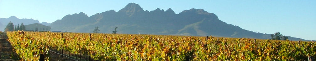 https://www.rollingsa.co.za/wheelchair-friendly-cape-town-and-winelands-tour/